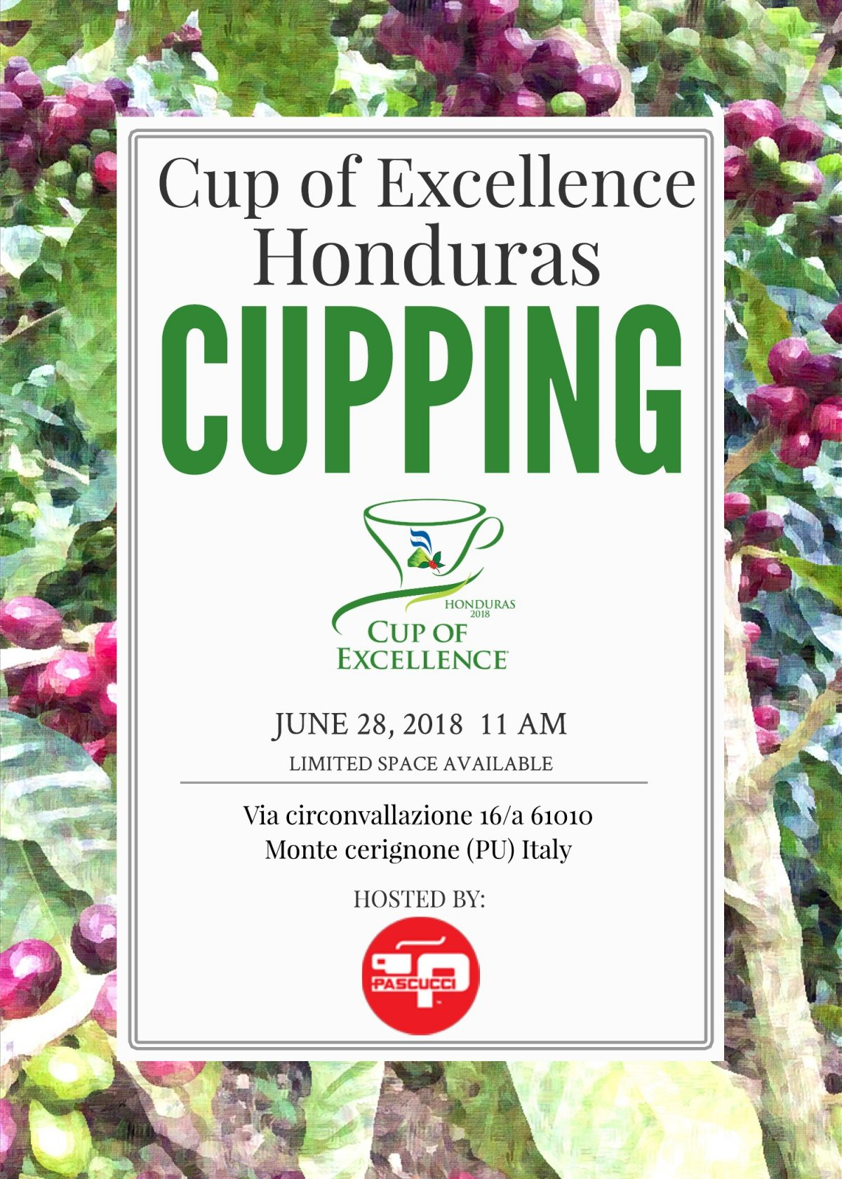 Caffè Pascucci Cup Of Excellence coffee Honduras